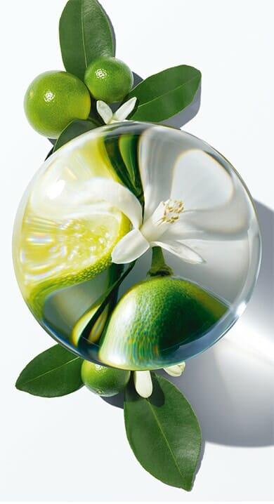 carolina-herrera-fragrances-confidencial-ingredients-oils